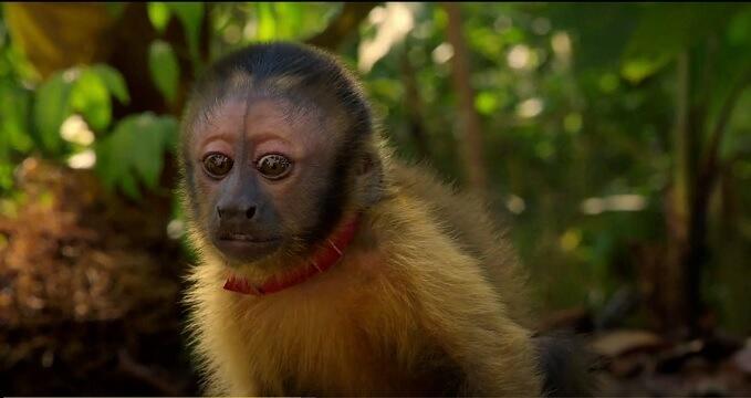 amazonia - 9 documentários imperdíveis na Netflix sobre a nossa relação com a natureza