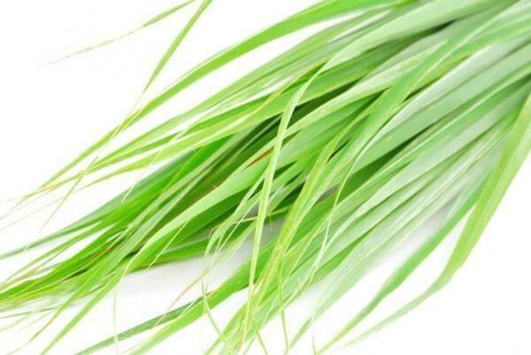 citronela - Aromaterapia: 7 óleos essenciais para se ter em casa