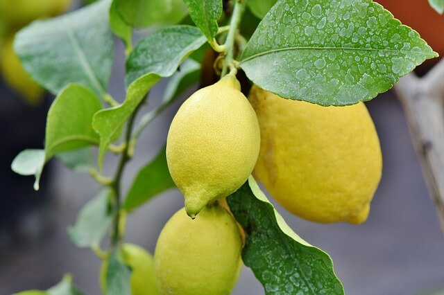 lemon 4029486 640 - Aromaterapia: 7 óleos essenciais para se ter em casa