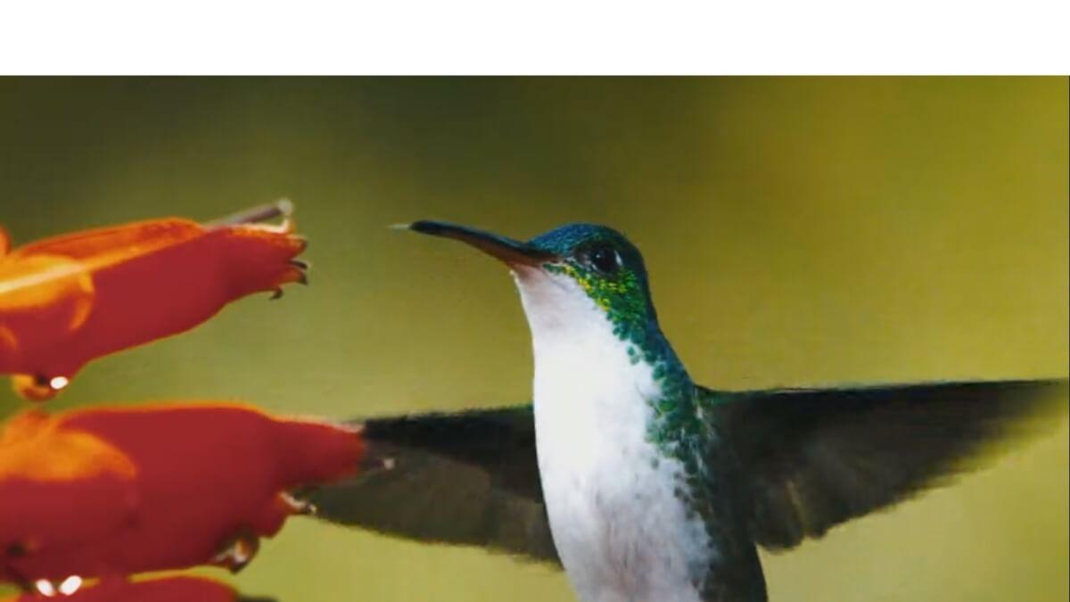 terra 1 - 9 documentários imperdíveis na Netflix sobre a nossa relação com a natureza