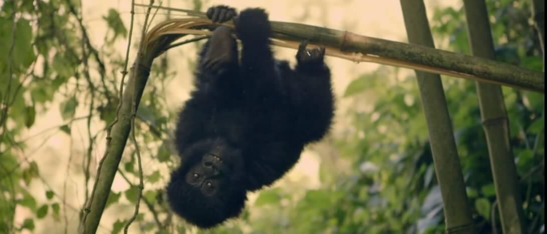 virunga2 - 9 documentários imperdíveis na Netflix sobre a nossa relação com a natureza