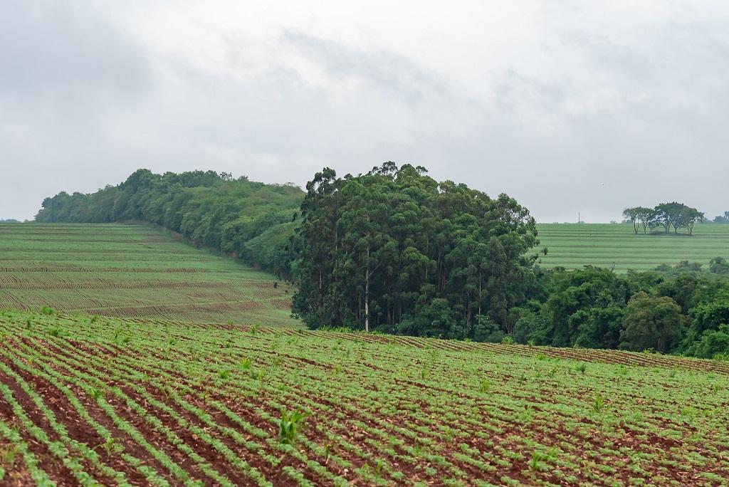 plantacao - Os projetos da Usina de Itaipu que restauram o meio ambiente e apostam na igualdade social