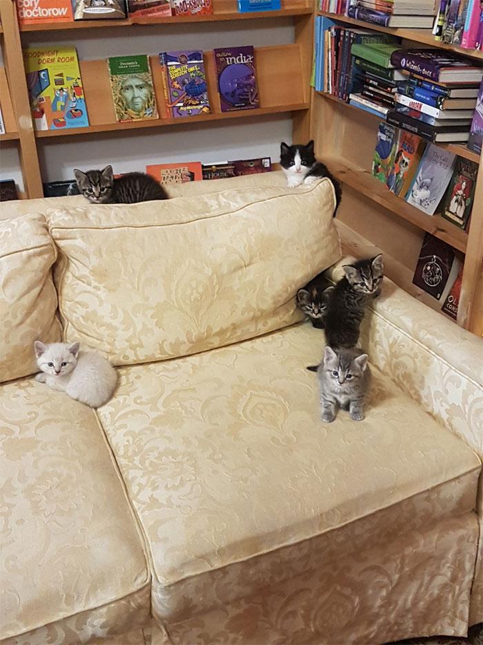 gatoselivros - Os gatos e sua inusitada atração por livros