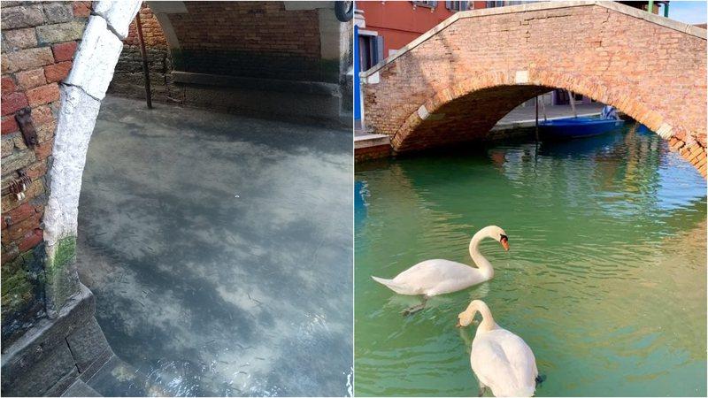 canais de veneza cisnes widelg - É preciso uma pandemia para melhorar o meio-ambiente?