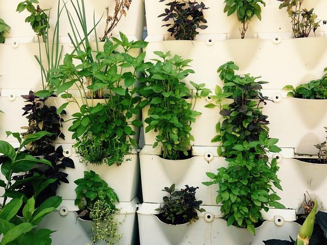 herbs 2278909 640 - A importância das plantas e ervas em nossas vidas