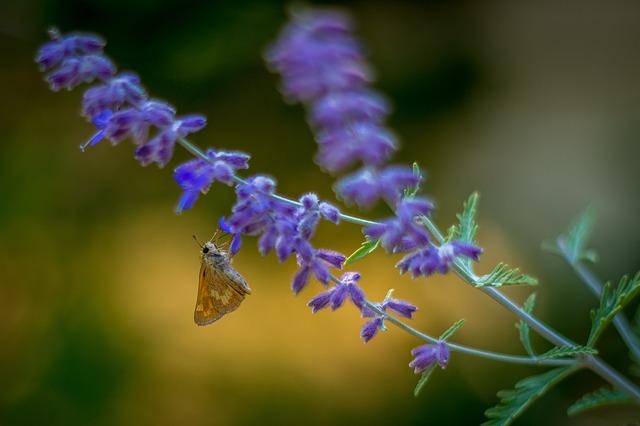 butterfly 3752847 640 - Descubra as propriedades terapêuticas das flores