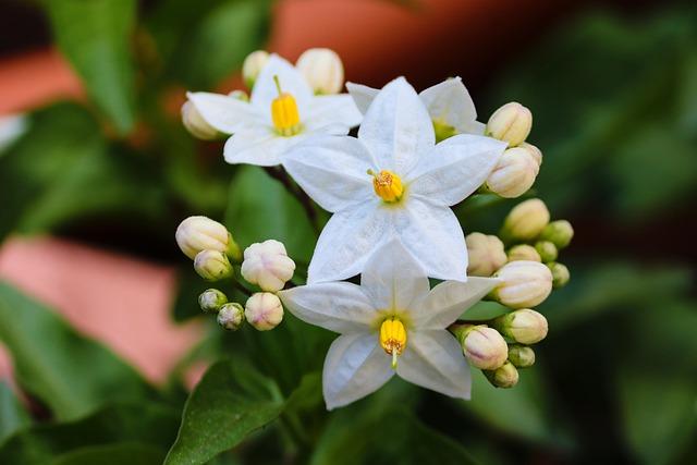 jasminum 5092158 640 - Descubra as propriedades terapêuticas das flores