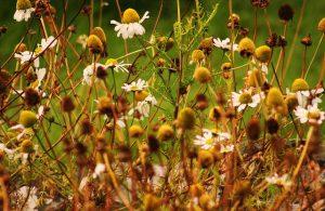nature 3198946 640 300x195 - Descubra as propriedades terapêuticas das flores