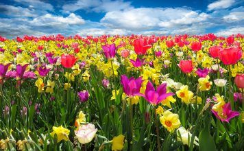 spring awakening 1197602 1280 356x220 - Início