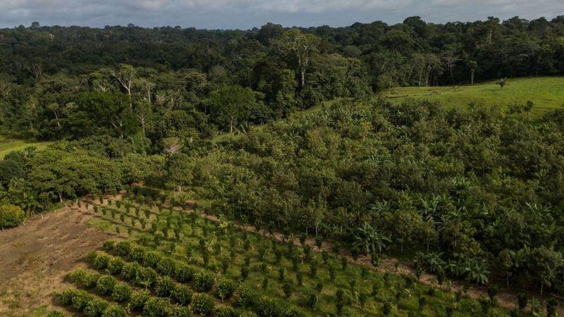 agroflorestal chicomendes - Mapeamento inédito revela 2,7 mil projetos de reflorestamento na Amazônia