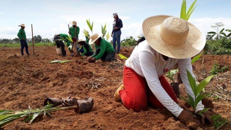 ecopore divul - Mapeamento inédito revela 2,7 mil projetos de reflorestamento na Amazônia
